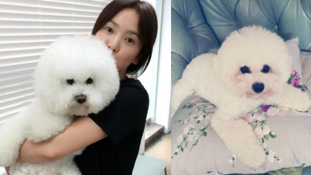 【160730】宋慧乔素颜抱小狗出镜 34岁的她娇嫩依旧