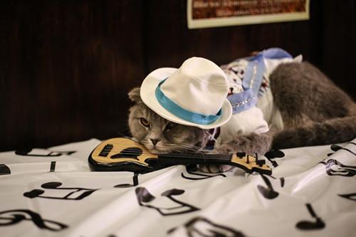 当猫咪cosplay托尼奖音乐剧,会是什么样?